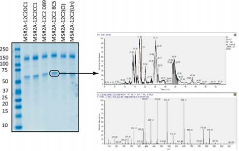 ab110292 in cell elisa v2 mass spectrometry