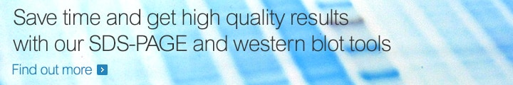 Save time and get high quality results with our SDS-PAGE and western blot tools
