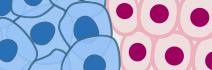 miRNA cancer cells