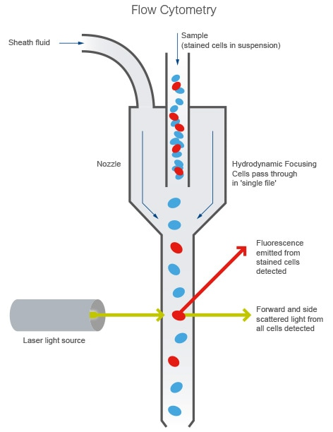 flow cytometry machine