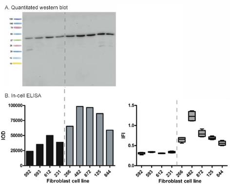 ab110289 in cell elisa v2