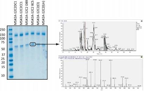 ab110292 in cell elisa v2 mass spectrometry