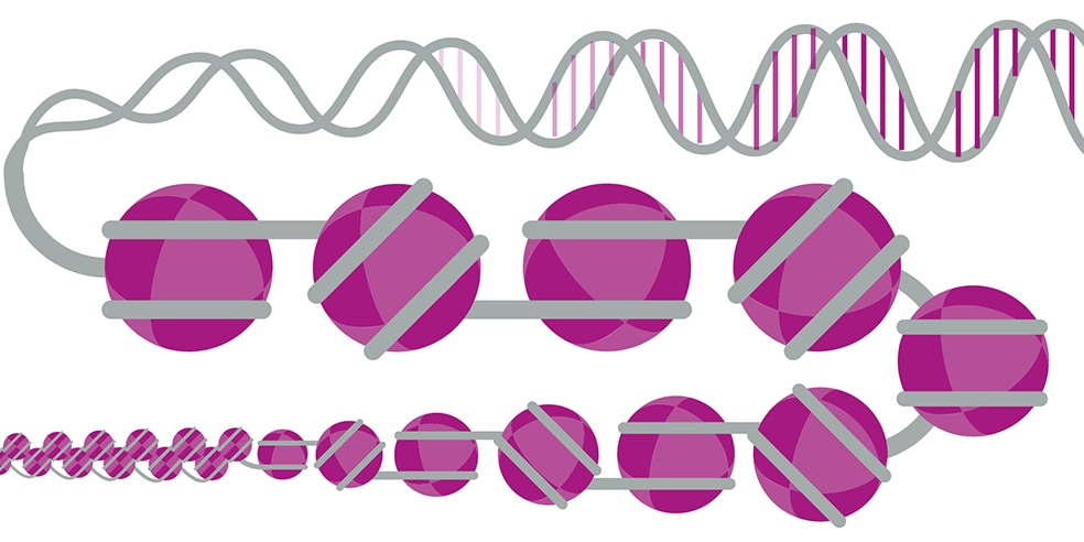 Chromatin and Epigenetics: From Mechanisms to Execution