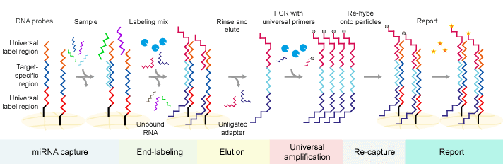 Multiplex miRNA circulating assay workflow