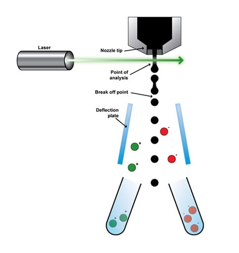fluorescence activated cell sorting of live cells   abcam  abcam
