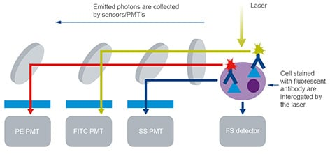 Flow cytometry | Fluorescent light filtered