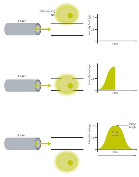 Flow cytometry PMT measure
