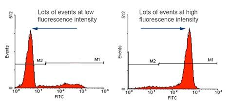 Fluorescence intensity measurements