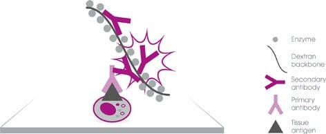 IHC guide v3 polymer detection 472px