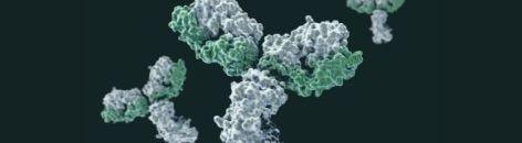 immunology month - autoimmune disease - cms - 472x130