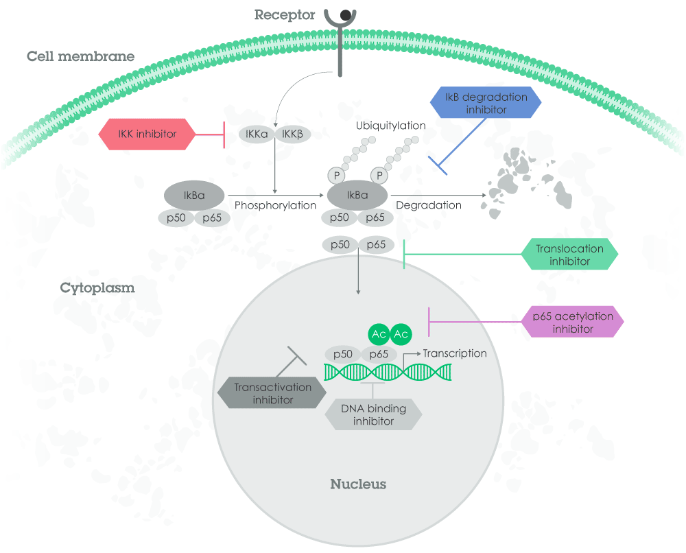Nf Kb Inhibitors And Activators Abcam Process Flow Diagram Salicylic Acid