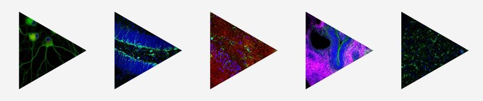 neuro month - 952x200
