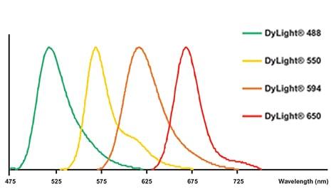 Dylight 174 Fluorochrome Conjugated Secondary Antibodies Abcam