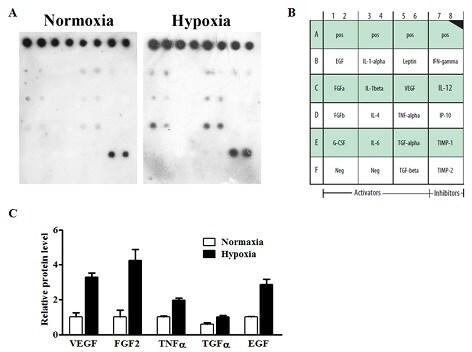 abcam ab133997 cytokine profile in mesenchymal stem cells in myocardial infarcted tissue